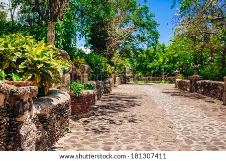 plants in tropical garden. view of the lush green vegetation and palm trees growing in the in the Dominican Republic - stock photo