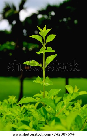 Plants Need Sunlight To Grow In The Same Tree So Many Have Contend With
