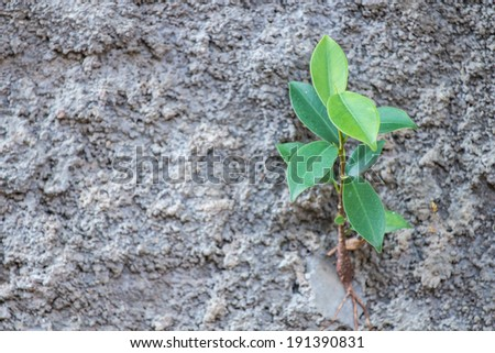 plants on cement wall - stock photo
