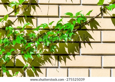 Plants on the wall - stock photo
