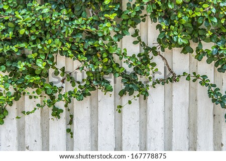 Plants on the white wall - stock photo