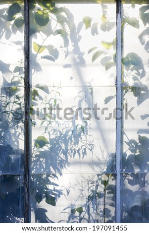 Plants shadows through greenhouse window - stock photo