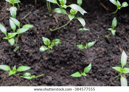 Plants sprout on vivid green bokeh background. horizontal