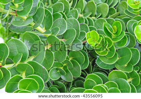 Plants With Green Leaves Forming A Background