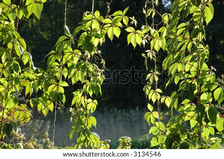 Plants with leaves in bright sunlight - stock photo