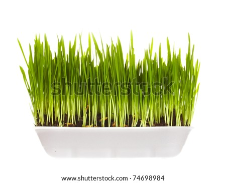 plastic container with young green sprouts, it is isolated on a white background - stock photo