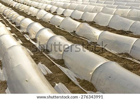 Plastic film mulch crop, close-up  - stock photo