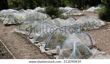 Plastic Hoops and Fleece to Protect Garden Vegetables. - stock photo
