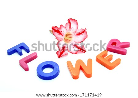 Plastic letters forming word FLOWER isolated on the white background - stock photo