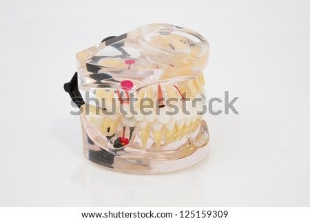 Plastic model of human denture for presentations - stock photo