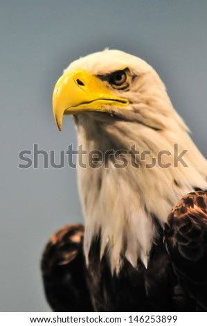 plastic North American Bald Eagle profile - stock photo