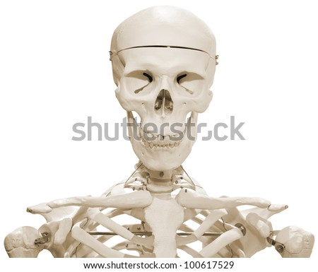 Plastic Skeleton Dummy Model Isolated with Clipping Path - stock photo