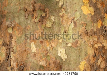 Platan tree bark texture - stock photo