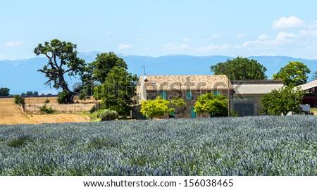 Plateau de Valensole (Alpes-de-Haute-Provence, Provence-Alpes-Cote d'Azur, France), country house and field of lavender - stock photo