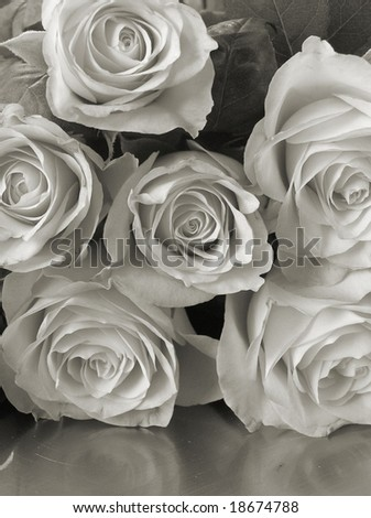 platinum camera reproduction/reflected roses - stock photo