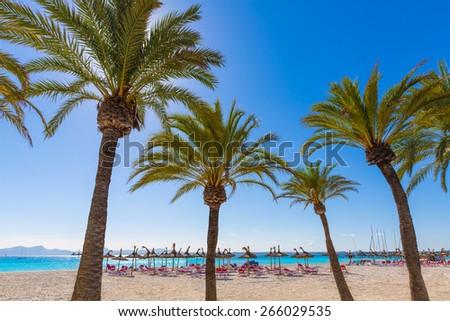 Platja de Alcudia beach Palm trees in Mallorca Majorca at Balearic islands of Spain - stock photo