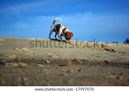 Play time at the beach - stock photo