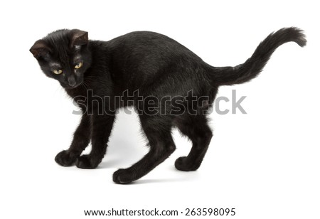 playful black cat looks back - stock photo