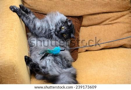 Playful cat - stock photo