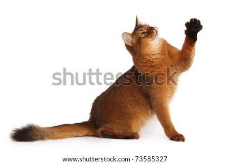 Playful cat - stock photo