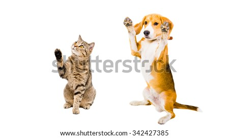 Playful cat and dog sitting together raised paws, isolated on white background - stock photo