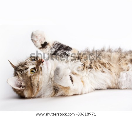 Playful cat lying on her back - stock photo