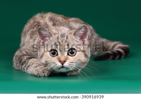 Playful cat on a green background - stock photo