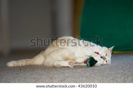 playful cat with green velvet catnip mouse, concept joy - stock photo