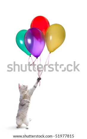 Playful cat with raised hand and heap of colored balloons