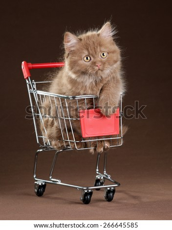 Playful cute fluffy kitten sitting in the shopping cart - stock photo