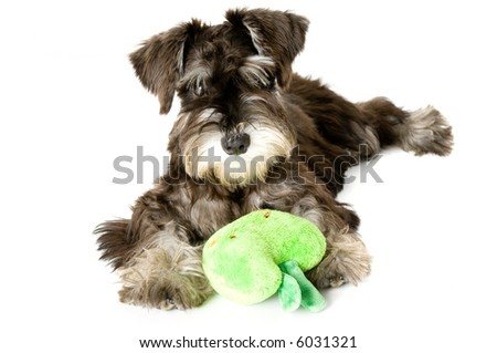 Playful dog with chew toy - stock photo