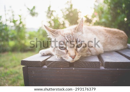 Playful domestic cat lying on a wooden bench looking at the camera. Shot outdoors in backlight with shallow depth of field, focused on the eyes. Toned image, low contrast filter and vignetting applied - stock photo