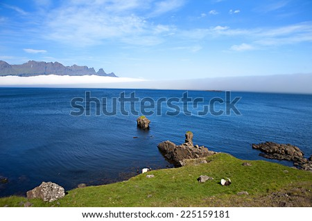 Playful Icelandic Sheep in Meadow - stock photo