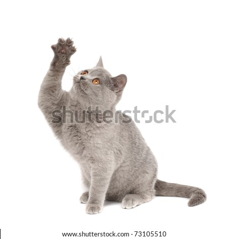 Playful kitten - stock photo