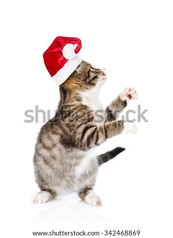 Playful kitten in red santa hat looking up. isolated on white background - stock photo