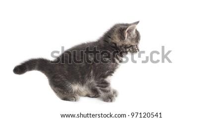 playful kitten in studio - stock photo
