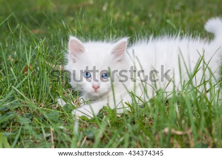 Playful kitten in the grass. With blue eyes. - stock photo