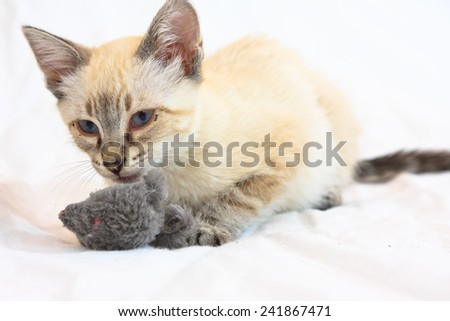 Playful kitten laying on a bed playing with a mouse toy - stock photo