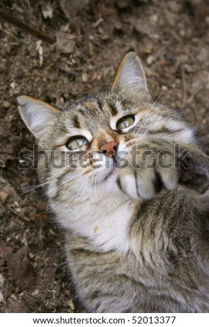 Playful kitten on the ground - stock photo