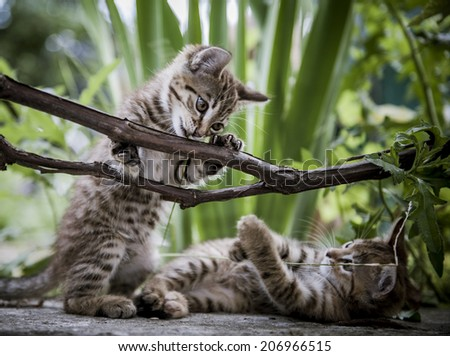 Playful kittens in a bush vine. - stock photo