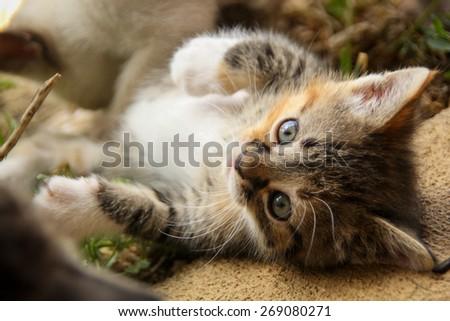 Playful Kitty - stock photo