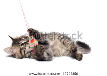 Playful little cat isolated over white with mouse toy - stock photo