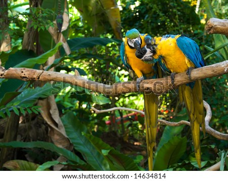 Playful Macaw