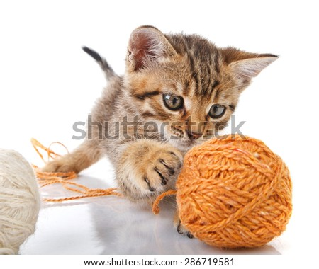 playful tabby kitten with brown and white  balls on white background - stock photo