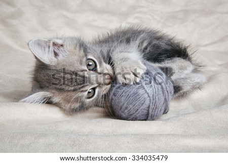 playful tabby kitten with gray ball on gray background - stock photo