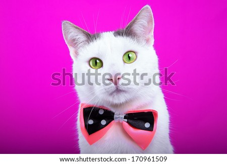 Playful white cat with bow-tie - stock photo