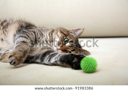 Playing cat - stock photo