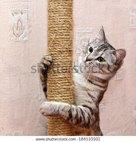 Playing cat on domestic background, curious cat, domestic cat, little cat playing in apartment, funny cat in poor light, curious cat, active cat, friendly cat - stock photo