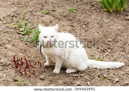 Playing cat. White cat playing with a ball in the garden, flea collarsPlaying cat. White cat playing with a ball in the garden, flea collars - stock photo