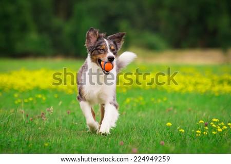 Playing Dog - stock photo
